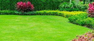 bien entretenir sa pelouse