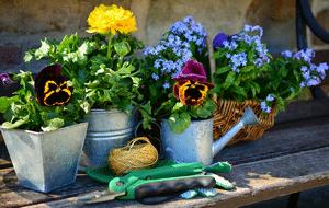 Meilleurs tutoriels jardinage