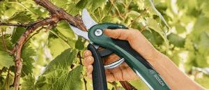 Meilleur sécateur électrique pour arbre fruitier